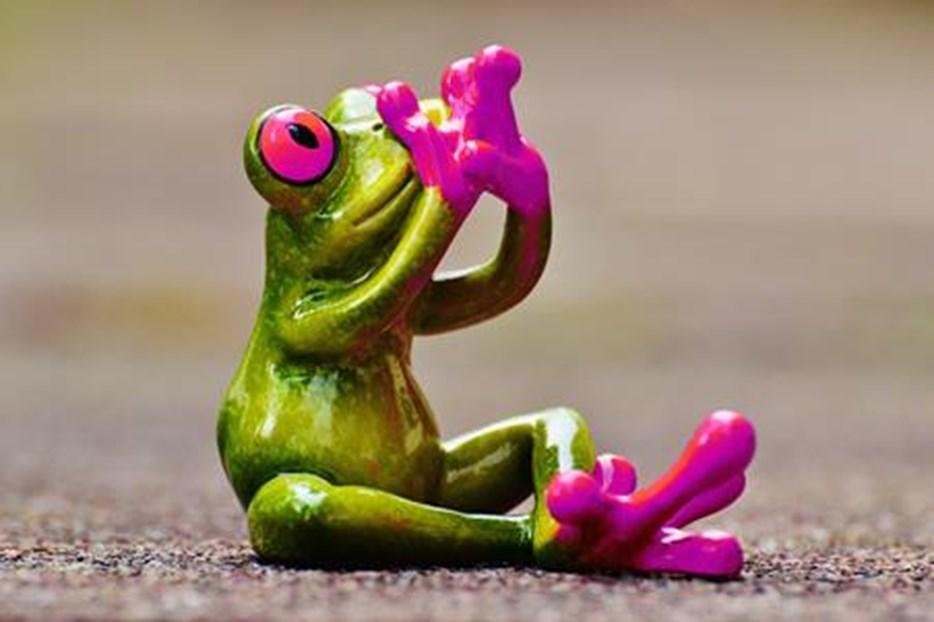 frog-1274753-pink.jpeg